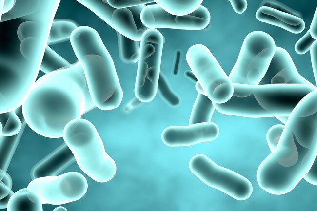 An increase in gut bacteria may lead to more gas.