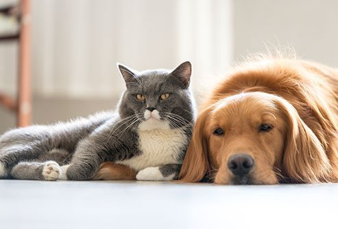 We love our pets, but their dead skin flakes can cause health problems.