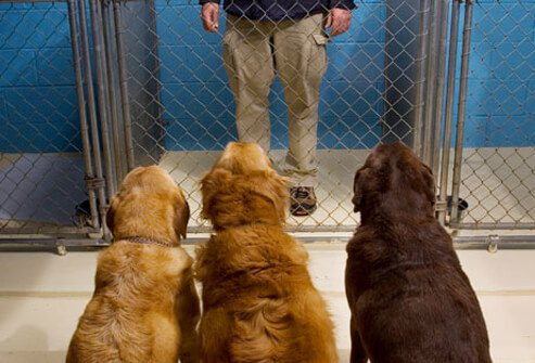 Three dogs looking at man in cage
