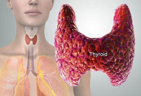 The thyroid gland produces, stores, and releases hormones that control the body's metabolism. Hyperthyroidism occurs when there is excess thyroid hormone in the blood.
