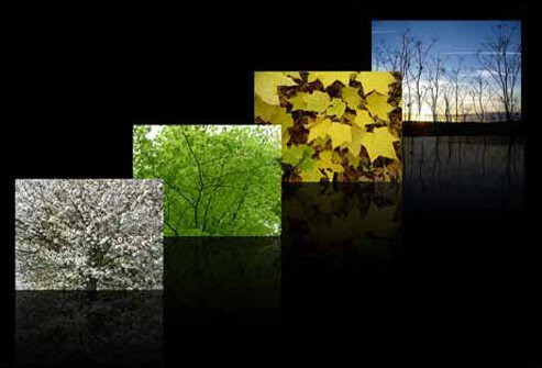 Photos of the four seasons -- spring, summer, fall, and winter