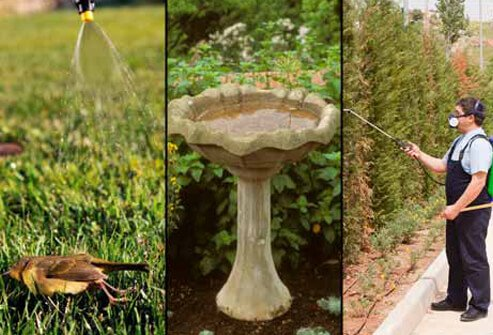 A person finds a dead bird on the lawn (left). This birdbath contains stagnant water (center). A man sprays insecticide for mosquitoes (right).