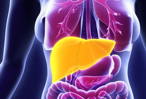 Your liver can repair and regenerate itself.