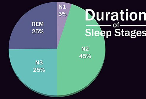 You begin the night in non-REM sleep and spend most of your rest time there.