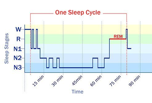 You typically go through all the sleep stages three to five times a night.
